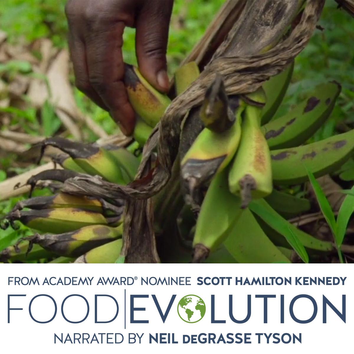 Food Evolution FB3